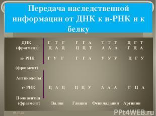 Передача наследственной информации от ДНК к и-РНК и к белку *