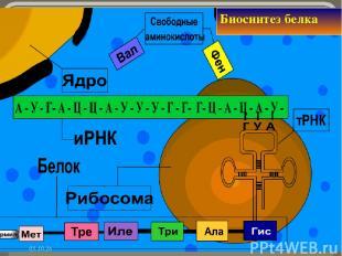* Биосинтез белка