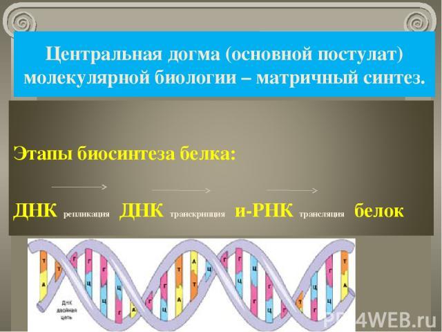 Центральная догма (основной постулат) молекулярной биологии – матричный синтез. *