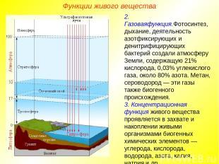 Функции живого вещества 2. Газоваяфункция.Фотосинтез, дыхание, деятельность азот