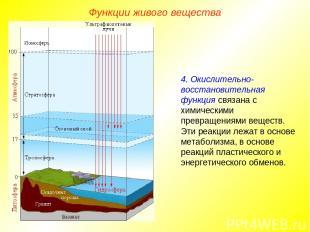 Функции живого вещества 4. Окислительно-восстановительная функция связана с хими