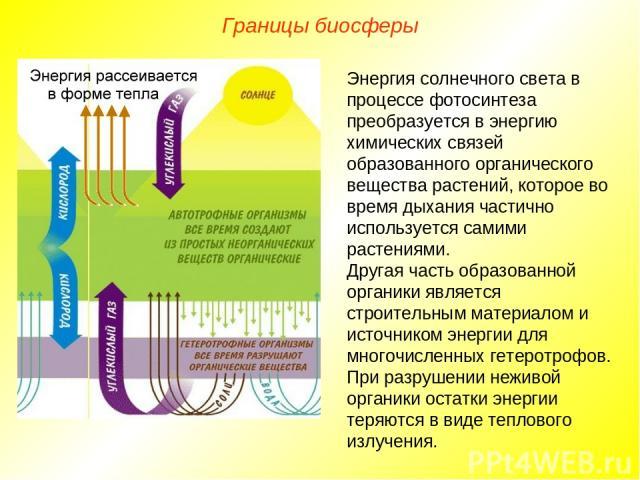 Границы биосферы Энергия солнечного света в процессе фотосинтеза преобразуется в энергию химических связей образованного органического вещества растений, которое во время дыхания частично используется самими растениями. Другая часть образованной орг…
