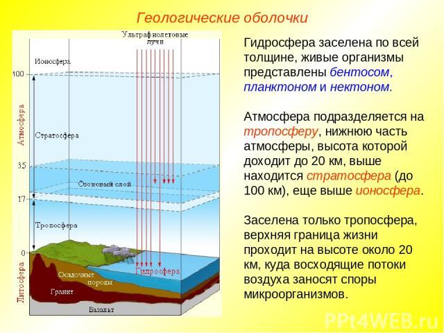 Гидросфера заселена по всей толщине, живые организмы представлены бентосом, планктоном и нектоном. Атмосфера подразделяется на тропосферу, нижнюю часть атмосферы, высота которой доходит до 20 км, выше находится стратосфера (до 100 км), еще выше ионо…