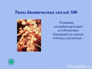 Типы биотических связей 500 Развитие азотфиксирующих клубеньковых бактерий на ко