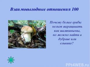 Взаимовыгодные отношения 100 Почему белые грибы нельзя выращивать как шампиньоны