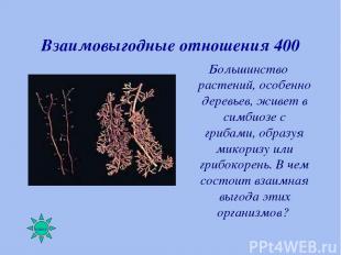 Взаимовыгодные отношения 400 Большинство растений, особенно деревьев, живет в си