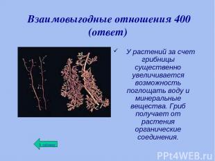 Взаимовыгодные отношения 400 (ответ) У растений за счет грибницы существенно уве