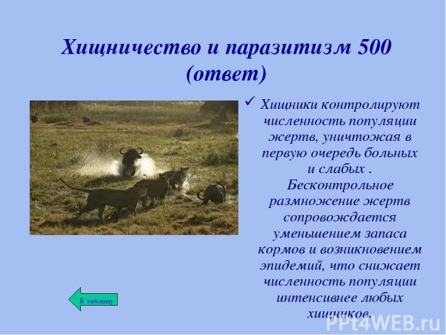 Хищничество и паразитизм 500 (ответ) Хищники контролируют численность популяции жертв, уничтожая в первую очередь больных и слабых . Бесконтрольное размножение жертв сопровождается уменьшением запаса кормов и возникновением эпидемий, что снижает чис…