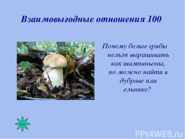 Взаимовыгодные отношения 100 Почему белые грибы нельзя выращивать как шампиньоны, но можно найти в дубраве или ельнике?