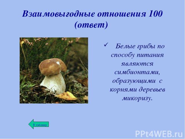 Взаимовыгодные отношения 100 (ответ) Белые грибы по способу питания являются симбионтами, образующими с корнями деревьев микоризу.