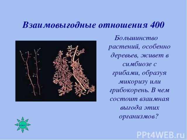 Взаимовыгодные отношения 400 Большинство растений, особенно деревьев, живет в симбиозе с грибами, образуя микоризу или грибокорень. В чем состоит взаимная выгода этих организмов?