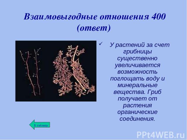 Взаимовыгодные отношения 400 (ответ) У растений за счет грибницы существенно увеличивается возможность поглощать воду и минеральные вещества. Гриб получает от растения органические соединения.