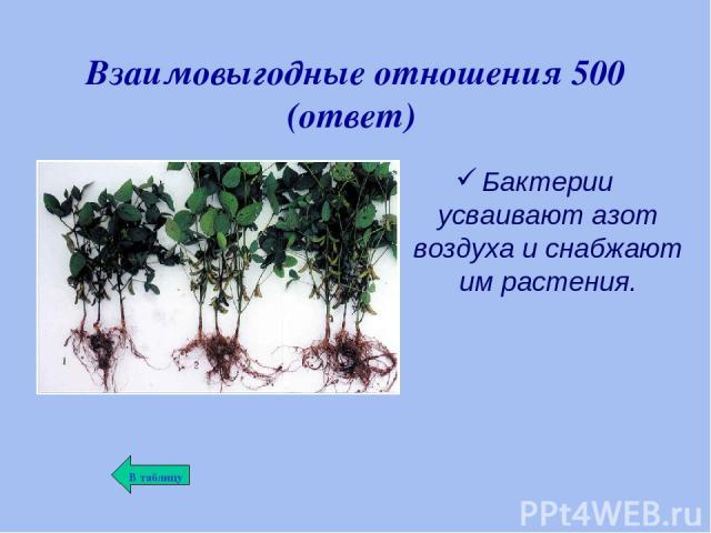 Взаимовыгодные отношения 500 (ответ) Бактерии усваивают азот воздуха и снабжают им растения.