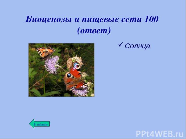 Биоценозы и пищевые сети 100 (ответ) Солнца