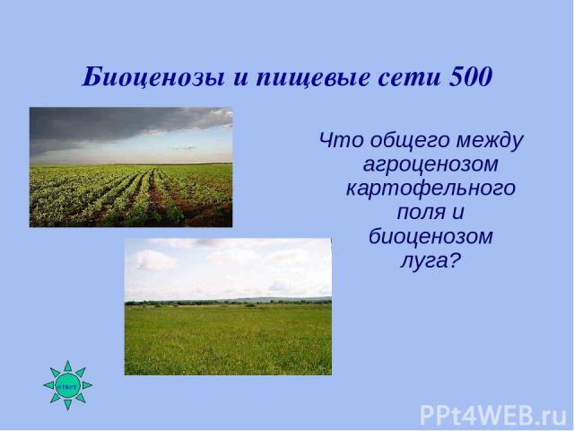 Биоценозы и пищевые сети 500 Что общего между агроценозом картофельного поля и биоценозом луга?
