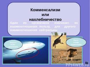 Нейтрализм организмы не влияют друг на друга, т.к. имеют различающиеся экологиче