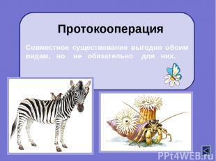 Представители одного вида (хищник) ловят и поедают представителей другого вида (
