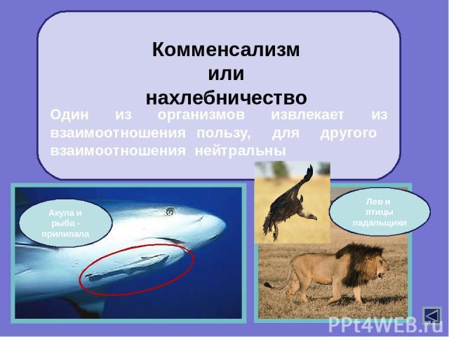 Нейтрализм организмы не влияют друг на друга, т.к. имеют различающиеся экологические ниши. заяц крот