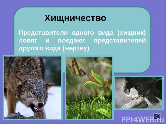 В 1932 году отечественный ученый Г.Ф.Гаузе предложил принцип исключения: два вида не могут существовать в одной и той же местности, если их экологические потребности идентичны. К какому типу биотических взаимодействий относится этот принцип? Выскажи…