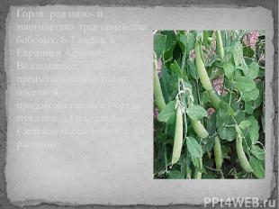 Горох род одно- и многолетних трав семейства бобовых. 6-7 видов, в Евразии и Афр