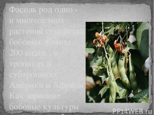 Фасоль род одно - и многолетних растений семейства бобовых. Свыше 200 видов , в
