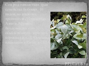 Соя род однолетних трав семейства бобовых. 10 видов, во влажных тропиках и субтр