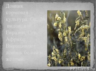 Донник кормовая культура. Ок. 26 видов, в Евразии, Сев. Африке. Выращивают донни