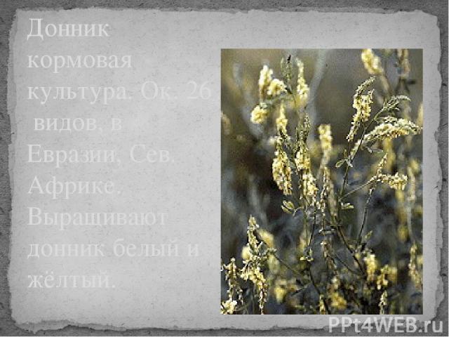 Донник кормовая культура. Ок. 26 видов, в Евразии, Сев. Африке. Выращивают донник белый и жёлтый.