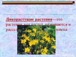 Дикорастущие растения—это растения, кот растут, развиваются и расселяются без по