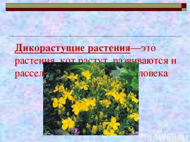 Дикорастущие растения—это растения, кот растут, развиваются и расселяются без помощи человека
