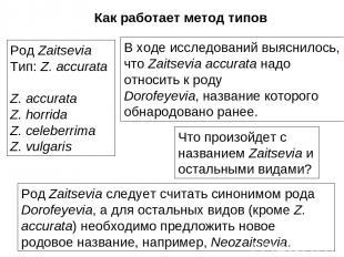 Род Zaitsevia Тип: Z. accurata Z. accurata Z. horrida Z. celeberrima Z. vulgaris