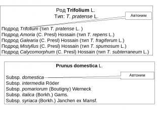 Род Trifolium L. Тип: T. pratense L. Подрод Trifolium (тип T. pratense L. ) Подр