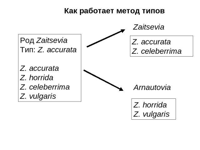 Как работает метод типов Род Zaitsevia Тип: Z. accurata Z. accurata Z. horrida Z. celeberrima Z. vulgaris Z. accurata Z. celeberrima Z. horrida Z. vulgaris Zaitsevia Arnautovia