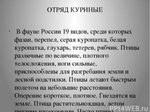 ОТРЯД КУРИНЫЕ В фауне России 19 видов, среди которых фазан, перепел, серая куро
