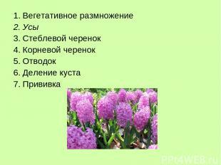 Вегетативное размножение Усы Стеблевой черенок Корневой черенок Отводок Деление