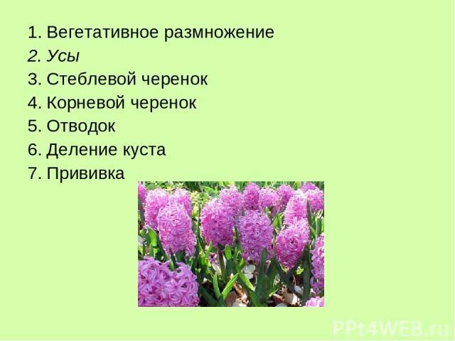 Вегетативное размножение Усы Стеблевой черенок Корневой черенок Отводок Деление куста Прививка