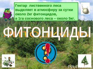 Гектар лиственного леса выделяет в атмосферу за сутки около 2кг фитонцидов, а 1