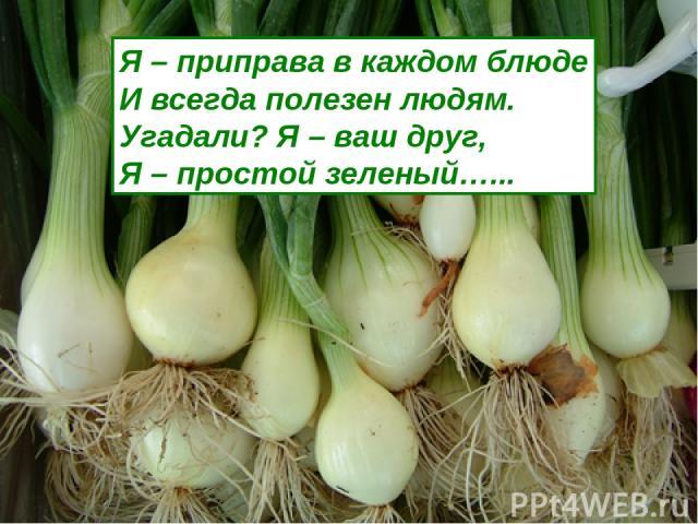 Я – приправа в каждом блюде И всегда полезен людям. Угадали? Я – ваш друг, Я – простой зеленый…...