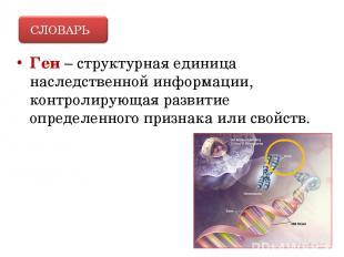 Ген – структурная единица наследственной информации, контролирующая развитие опр