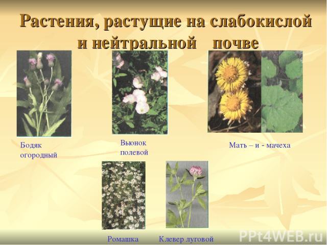 растения для кислых почв база
