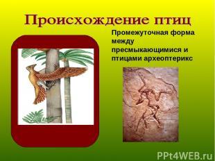 Промежуточная форма между пресмыкающимися и птицами археоптерикс