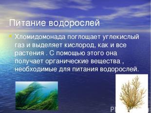 Питание водорослей Хломидомонада поглощает углекислый газ и выделяет кислород, к