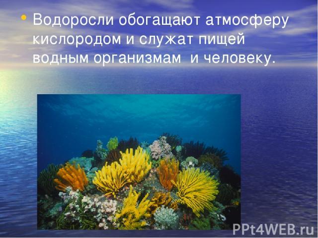 Водоросли обогащают атмосферу кислородом и служат пищей водным организмам и человеку.