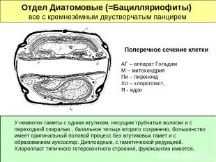 Отдел Диатомовые (=Бацилляриофиты) все с кремнезёмным двустворчатым панцирем Поп