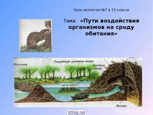 Урок экологии №7 в 10 классе Тема: «Пути воздействия организмов на среду обитани