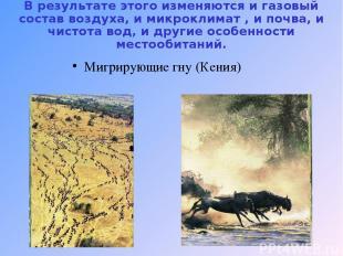 В результате этого изменяются и газовый состав воздуха, и микроклимат , и почва,