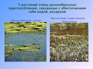 У растений очень разнообразные приспособления, связанные с обеспечением себя вод