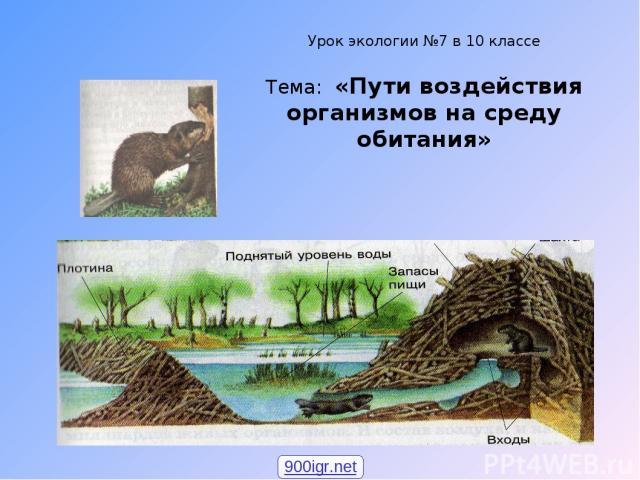 Урок экологии №7 в 10 классе Тема: «Пути воздействия организмов на среду обитания» 900igr.net