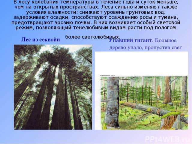 В лесу колебания температуры в течение года и суток меньше, чем на открытых пространствах. Леса сильно изменяют также условия влажности: снижают уровень грунтовых вод, задерживают осадки, способствуют осаждению росы и тумана, предотвращают эрозию по…