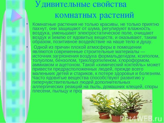Удивительные свойства комнатных растений Комнатные растения не только красивы, не только приятно пахнут, они защищают от шума, регулируют влажность воздуха, уменьшают электростатическое поле, очищают воздух и землю от ядовитых веществ, и оказывают, …